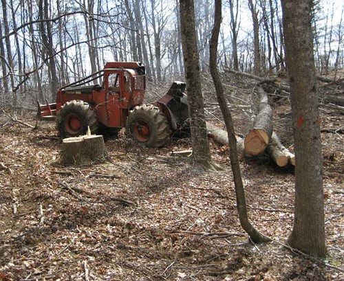 Dragging a poplar and cherry out of the woods. The tree in the foreground is marked to cut.