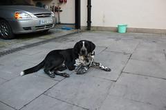 La policía municipal recoge a este perro extraviado