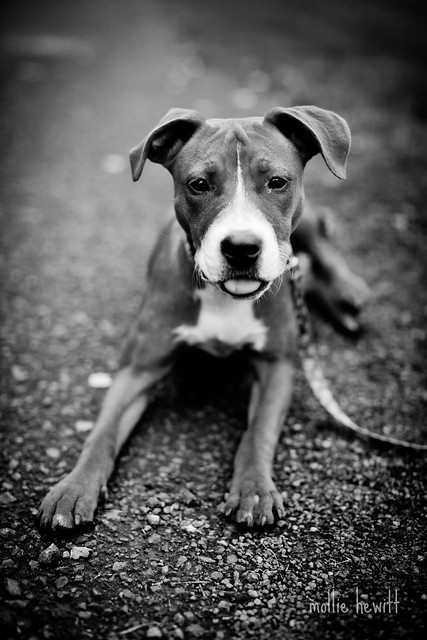 hopi in black and white