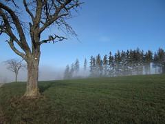 Hünersedel im Nebel