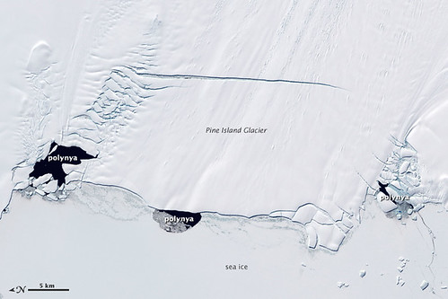Polynyas and the Pine Island Glacier, Antarctica | by NASA Earth Observatory