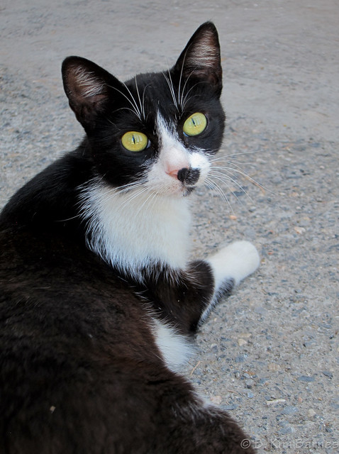 Another Greek cat