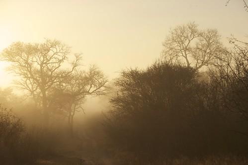 africa trees sunrise dawn south foggy sunrising foggytrees