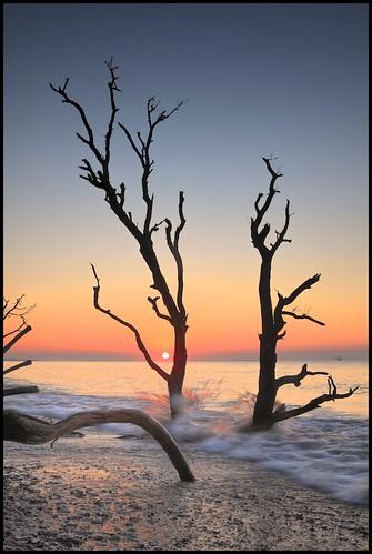 trees sun tree sc water sunrise landscape flickr outdoor southcarolina blueskies atlanticocean ef2470mmf28lusm palmetto edistoisland singleimage canondpp borderfx dfine20 botanybayplantation sharpenerpro30 viveza2