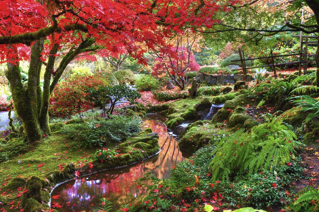 Japanese Garden Front Yard