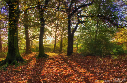autumn trees sky sun sunlight green leaves yellow landscape gold leaf woods nikon raw shadows hdr 3xp handheldhdr howellwoods southkirkby nikond5100