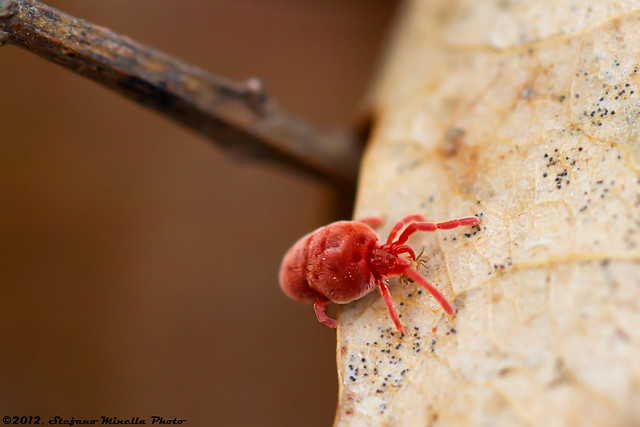 298/365 [365 Project] - Cannibal Spider