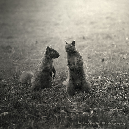 cute grass animal mammal squirrel couple character talk outstandingromanianphotographers