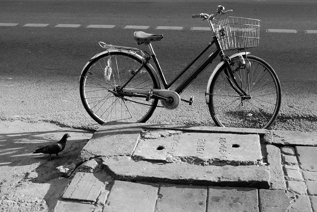 bike and bird