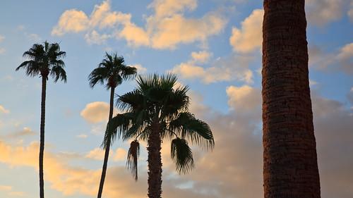 travel arizona phoenix landscapes saguaro personalfavorites