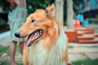 dog | by jeff_ro