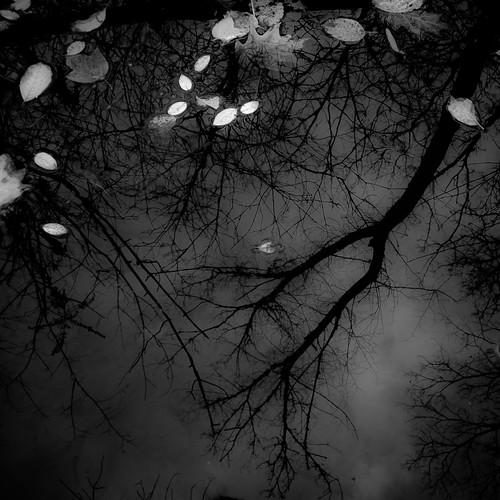 autumn trees sky blackandwhite bw reflection water monochrome leaves creek forest dark square blackwhite woods nikon darkness branches d5000 noahbw