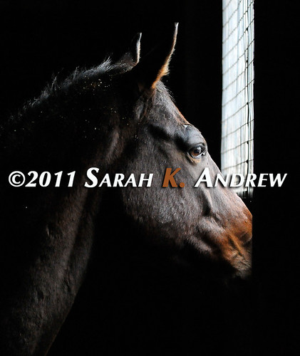 Wistful | by Rock and Racehorses