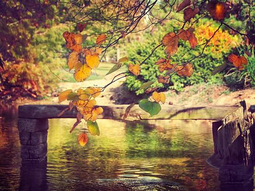 autumn light tree fall leaves pond missouri springfield ripples sublime japanesestrollgarden jessicadrossintextures pixelmama