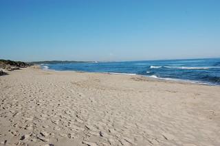 La spiaggia delle mie piante | by gino cherchi