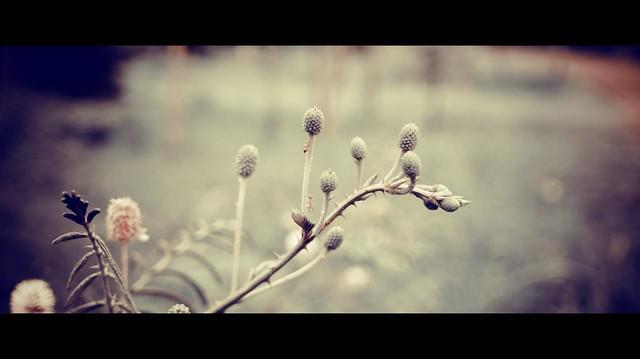 Weeds..