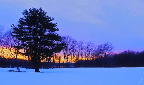 winter sunset silhouette pinetree sunrise connecticut glastonbury winterlandscape coth winterafternoon supershot snowyfield wintersilhouette coth5 cloudsstormssunsetssunrises pjddigipic sunrays5