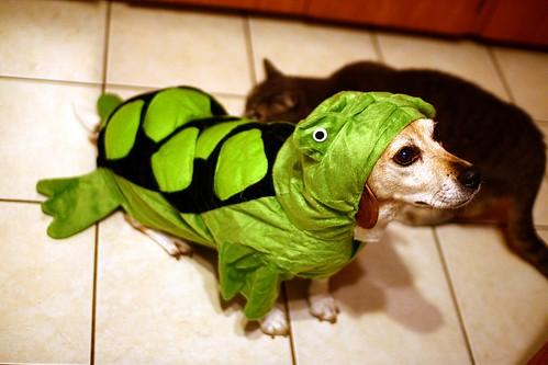 Turtle Beagle! | by Martin Cathrae