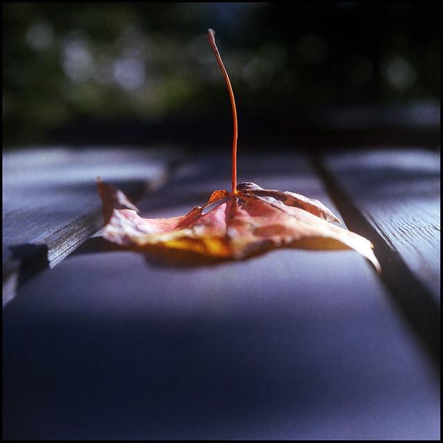 Autumn leaf on a tree table