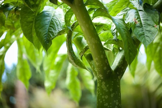 Tropical Gardens Of Maui 6315