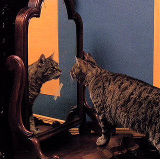 Pepper gazing into the mirror before a self-portrait | by Need This Book
