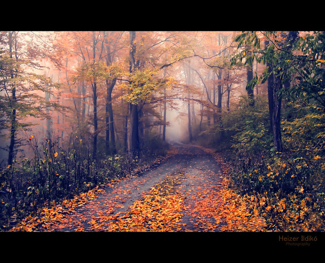defoliate / lehullanak a levelek