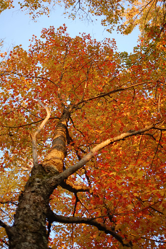 Another tree | by Darron Birgenheier