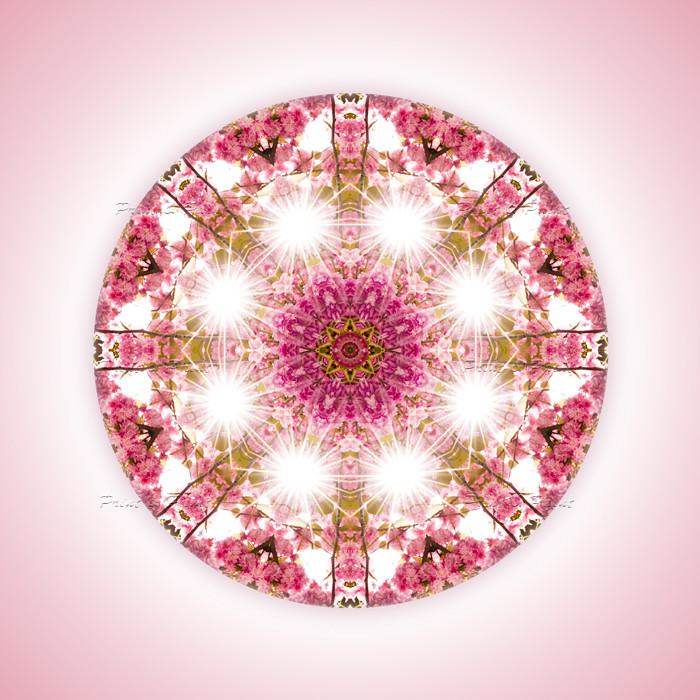 Natur Mandala Feng Shui Bild Kirschbluete Printandpaint Flickr