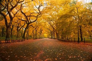 'American Elm', United States, New York, New York City, Central Park, Mall Area, Fall Colors | by WanderingtheWorld (www.ChrisFord.com)