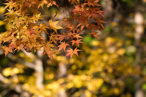DSC_A77_00319   by jorge.kashima