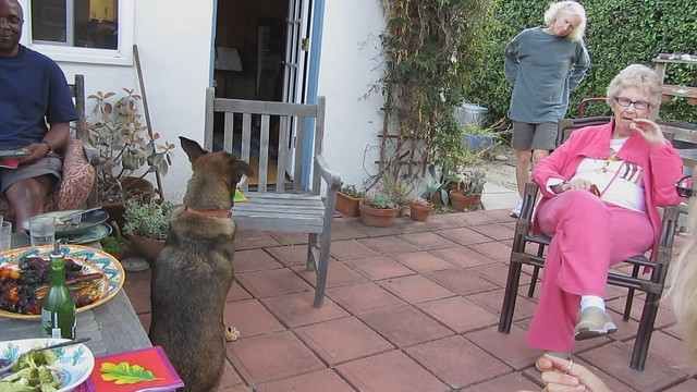 MVI_1212 cindy dog trick