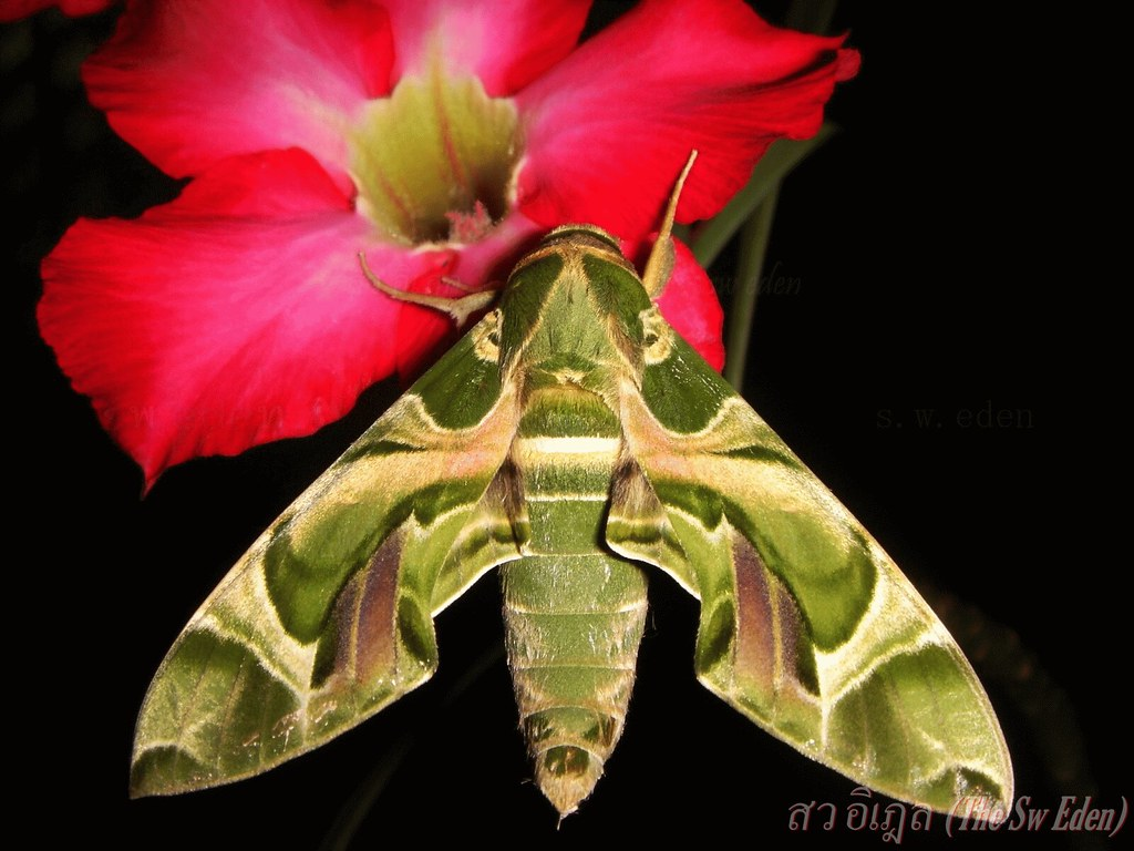 Thailand Education Teachers Students School University Classroom Studying Learning Activities adenium moth