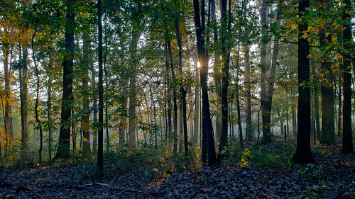 sunrise woods maryland gh2 upperco canonfd24mm