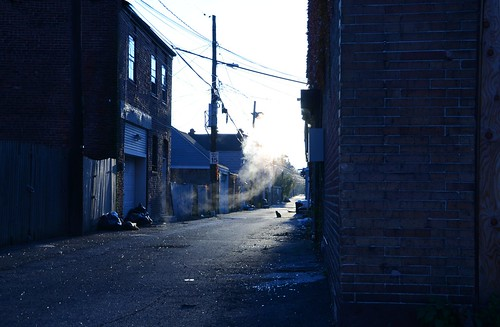 morning cat newjersey alley nj mercercounty trenton