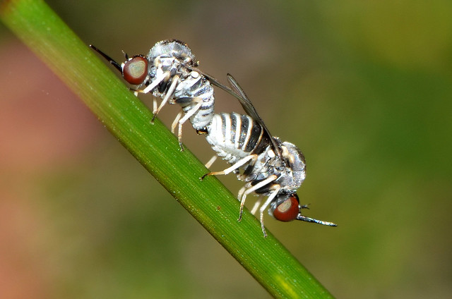 Little flies
