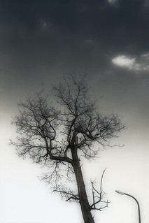 égig érő fa // sky-reaching tree