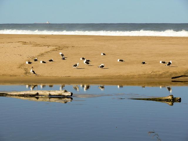 Resting Seagulls Umkobi