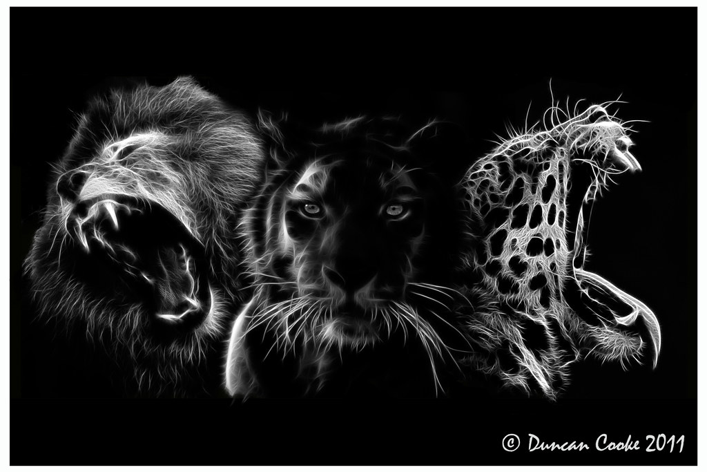 Big-Cats-Lion,-Tiger,-Jaguar  | Lion, Tiger, Jaguar
