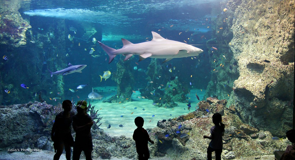 Shark Explorer | From Wikipedia, the free encyclopedia ...