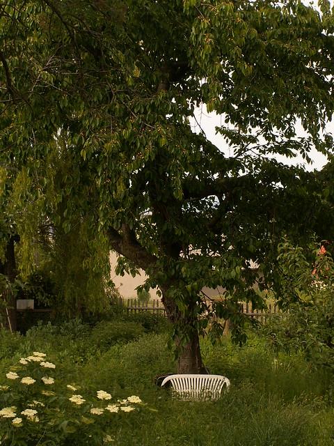 Im Walde in Cunnersdorf in der Einsamkeit hat nicht Lust, mich freizulassen, noch Lust, auch mich ans Herz zu fassen. Dem Vogel gleich im Vogelbauer, der Tag und Nacht von Liebe singt, der, ob es ihr nicht zu Herzen dringt dat sie nicht Lust, mich freizulassen 111