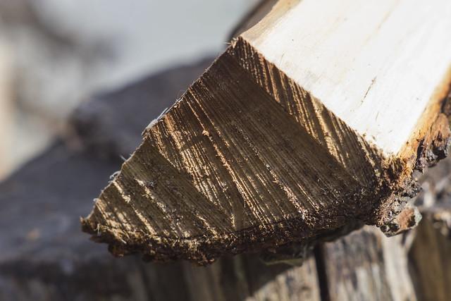 Cutted Log