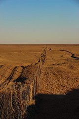 The  Dog Fence - longer than the great Wall Of China
