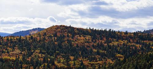 autumn mountain newmexico fall forest landscape woods foliage nm grantcondit gecondit