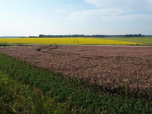 pink summer colour nature field landscape scenery europe estonia baltic baltics estland viro estonie maastik эстония jõgevamaa εσθονία