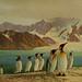 Oceanic birds of South America. v.1.