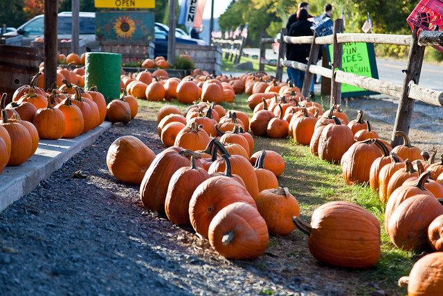 Indian Ladder Farms - Altamont, NY - 2010, Oct - 02.jpg