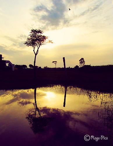 morning canon reflections paradise hues cwc sx20is ragavendran tirumulaivoyal
