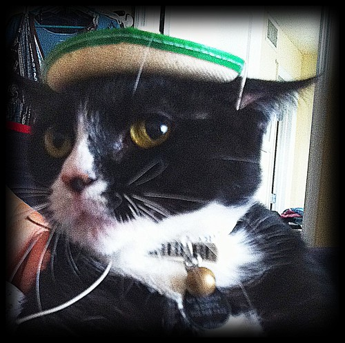 Sombrero kitty | by dcwriterdawn