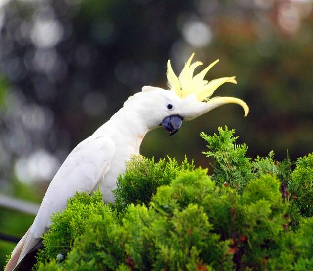 Ernie's Parrots