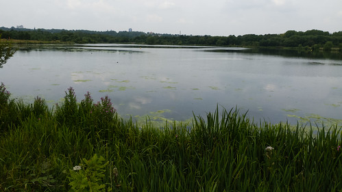 Swan Pool, Sandwell valley